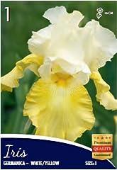 Idea Regalo - BULBI DA FIORE DI QUALITA' A PIANTAGIONE PRIMAVERA / ESTATE A FIORITURA ESTIVO / AUTUNNALE (1, Iris Germanica White/Yellow)