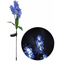 Flor de jacinto con luz solar Cr