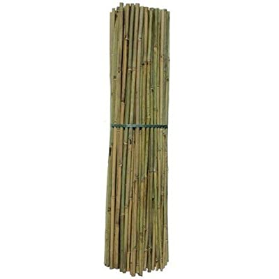 Bambus-Stäbe 1,5m, Ø 13-15mm von TerraGala - Du und dein Garten