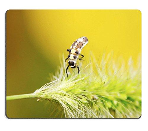 msd-caucho-natural-gaming-mousepad-imagen-id-26683866-mariquita-larvas-sobre-verde-planta-en-el-salv
