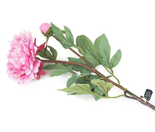Floral Elegance Artificiel 80 cm Tige Unique Rose pivoines X 12 - Artificiel de Plage de Fleur en Soie