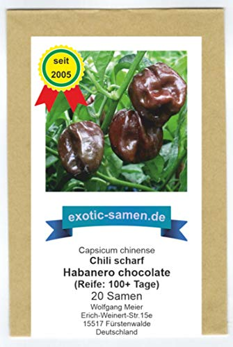 Eine extrem scharfe, braune Chili-Sorte - Peperoni - Habanero chocolate - 20 Samen