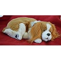 Breathable König Charles Cavalier Puppy Companion Pet für Menschen mit Gedächtnisverlust von Alterung und Pflegekräfte preisvergleich bei billige-tabletten.eu