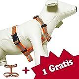 Tamia Living 2er Reflektierendes Hundegeschirr Geschirr Brustgeschirr Soft Nylon mit unterschiedlichen Größen B Ware (GA1007orange)