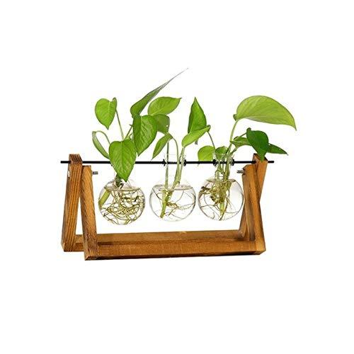 Ferry Hydroponischen Pflanze Transparent Vase Holzrahmen Vase für Dekoration Glastisch Pflanze Bonsai Decorationn: Rot, China