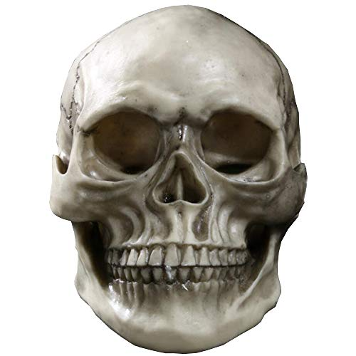 Schädel Lebensgroße Replik Realistisches Menschliches Skelett Gotisches Dekor Kunstharzmodell Anatomisches Medizinisches Lehrskelett für Medizinische Ausbildungshilfe ()