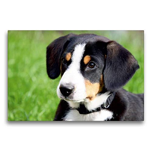 Premium Textil-Leinwand 75 x 50 cm Quer-Format Entlebucher Sennenhund | Wandbild, HD-Bild auf Keilrahmen, Fertigbild auf hochwertigem Vlies, Leinwanddruck von SchnelleWelten