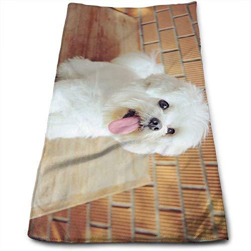 Hectwya Malteser Hund EIN Baumwollhandtücher (11,8