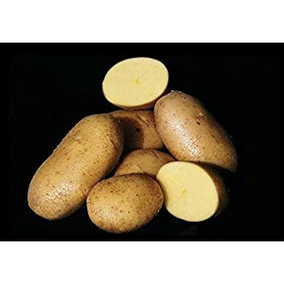 PLAT FIRM GERMINATIONSAMEN: Potato Seed - * AGRIA * - ausgezeichnete Wahl für Gebacken, gebraten, gekocht - 6 Tubers
