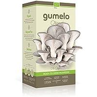 Offre découverte 5 jours ! Kit à champignons - Kit culture de champignons Pleurotes gris Bio - GUMELO (Gris) - Haut de gamme - Champignons frais - idée cadeau, fête, anniversaire, plaisir d'offrir