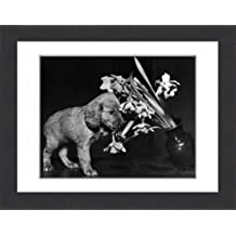 Framed 16x12 Print of Susi - pulling over a vase of flowers (14362469)