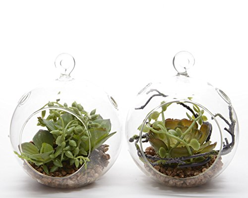 plante-grasse-cm11-bille-vtr
