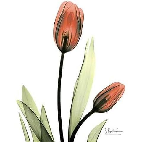 feelingathome-Impresi—n-artistica-tulipes-rouges-cm77x57-poster-lamina-para-cuadros