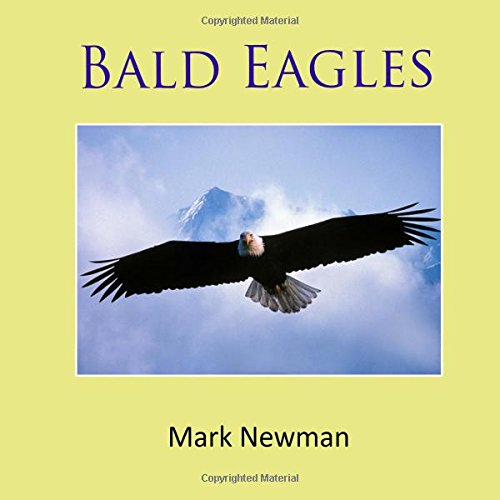 Bald Eagles -