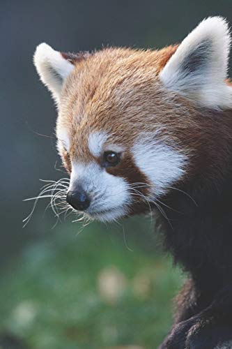 Duschvorhang Kostüm - Katzenbär / Panda Notizbuch: mir rotem Panda aka. Katzenbär als Motiv | 120 Seiten liniert in Taschenbuchgröße
