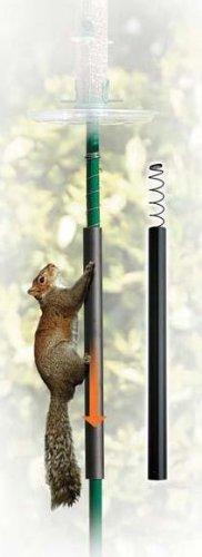 squirrel-slinky-by-jacobi-jayne