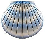 """Biologisch abbaubar Verbrennung Asche Casket/Urne–Erwachsene Größe–Die """"Shell–Aqua Blau"""""""