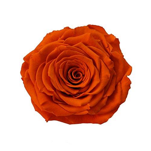 eternal-roses-xxl-rosenkopf-konserviert-farbe-orange