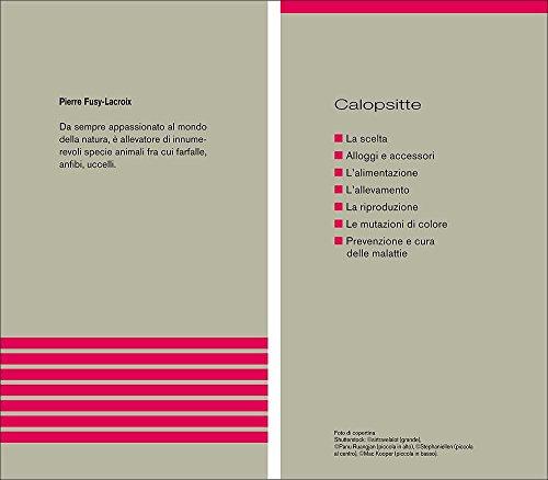 Zoom IMG-2 calopsitte