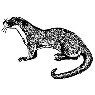 25-cm-lontra-timbri-in-gomma-5281