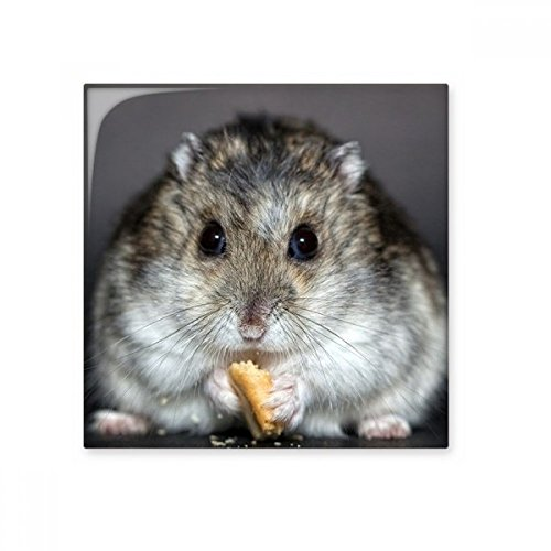 Hamster Ratten Tier Cute Eat Keramik Bisque Fliesen Badezimmer Decor Küche Keramik Fliesen Wand Fliesen, sku00216544f16162-M