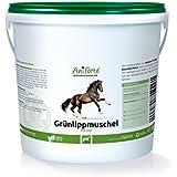 AniForte Grünlippmuschel-Pulver 1 kg- Naturprodukt für Pferde