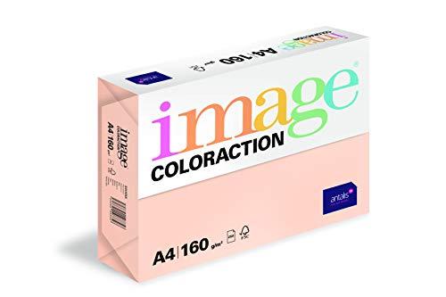 160 gr//mq Coloraction 838A 160S 30 Antalis DIN A4 colore Carta per fotocopie Grigio
