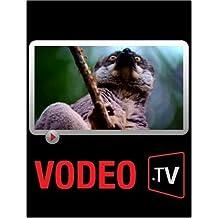 Le lémurien : Une espèce menacée par la déforestation