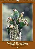 Vögel Ecuadors (Wandkalender 2019 DIN A3 hoch): Die unterschiedlichen Vogelarten vermitteln Ihnen einen Eindruck welche Artenvielfalt im Andenstaat ... (Monatskalender, 14 Seiten ) (CALVENDO Tiere) - Armin Brockner