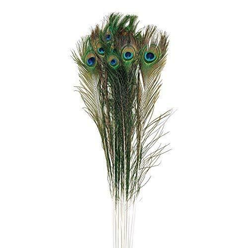 Trimming Shop Natürlich Echt Pfauenfedern UK (30-35 cm) Groß - Mehrfarbig, Pack of 10