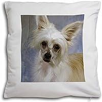 Advanta Powder Puff perro crestado chino Feel de terciopelo suave cojín interior con funda de almohada