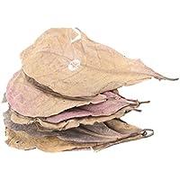 emourstm gigante Natural Catappa Leaf Betta hojas para Fish Tank Acuario mascotas, 12piezas