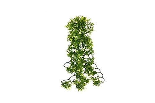 Komodo-Croton-Plant