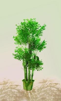 EUROPALMS Fishtail-Palmbaum, 380cm