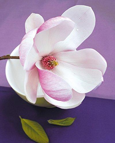 Editions Braun Beyler Catherine Composition Zen: Fleur De Magnolia Sur Coupe Verte Plakat Papier violett 40 x 50 x 0.05 cm Magnolia Coupe