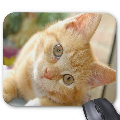 Gaming Mouse Pad Nette freche Katze Design f¨¹r Desktop und Laptop 1 Pack