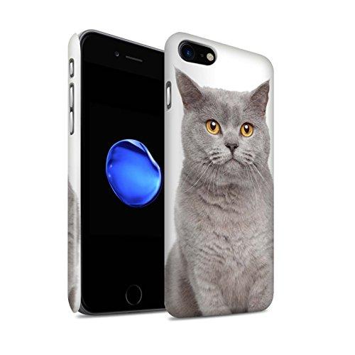 STUFF4 Matte Snap-On Hülle / Case für Apple iPhone 7 Plus / Bengel Muster / Katze Kollektion britische Blau