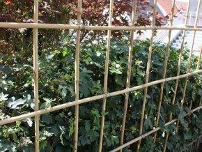 50 Stück Bambusstäbe - Bambusstangen 182 cm lang/ 12-14 mm dick von Native Plants von Native Plants auf Du und dein Garten