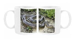 Photo Mug de Green ANACONDA-accouplement, les mâles avec 3