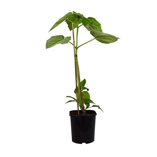 Amazon.de Pflanzenservice 261801