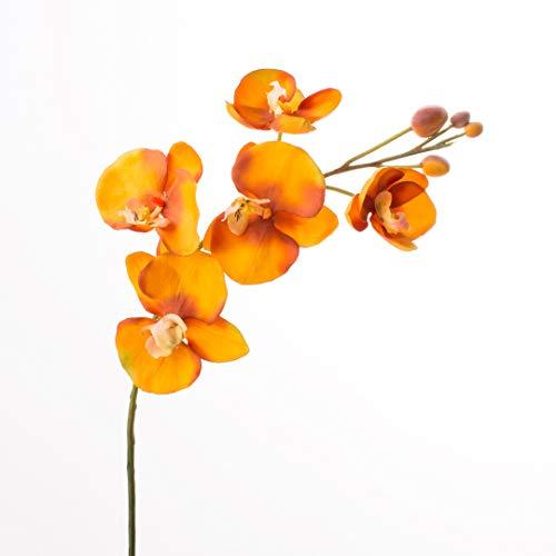 Schmetterlingsorchidee Gewicht