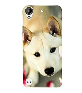 PrintVisa Sweet Dog 3D Hard Polycarbonate Designer Back Case Cover for HTC Desire 530