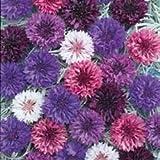 Fiore - Kings Seeds - Confezione Multicolore - Fiordaliso - Double Mix immagine