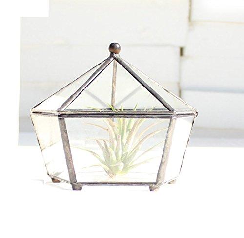 DingSheng Glass Jewelry Box Pentagon Shape Succulent Moss Fern Plant Geometric Display Planter Tabletop Centerpiece Decor Garden DIY Vase with Swing Lid - Swing Vase