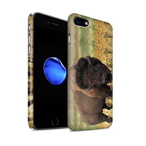 STUFF4 Matte Snap-On Hülle / Case für Apple iPhone 7 Plus / Schwarzer Bär Muster / Nordamerika Tiere Kollektion Bison