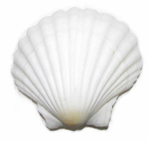 véritable Coquillage de plage Pince à cheveux de mariée sirène Boho festival mariage blanc exclusivement vendu par – Beauté G68