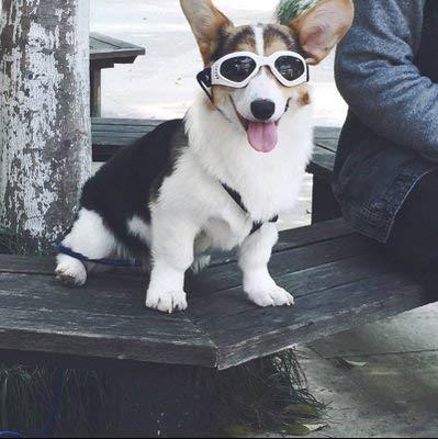 Namsan stilvolles und Fun Tier / Hundewelpen UV-Schutzbrillen Sonnenbrille wasserdichten Schutz Sun-Brille fuer Hunde-Weiss