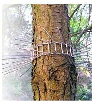 Ceinture d'arbre anti-chat