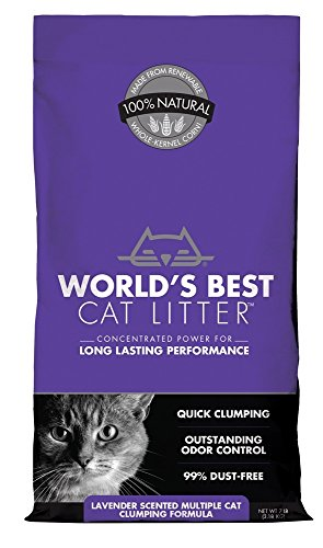 Mejores gatos del mundo - Camada de gato lila - 7libras.