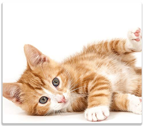Wallario Herdabdeckplatte/Spritzschutz aus Glas, 1-teilig, 60x52cm, für Ceran- und Induktionsherde, Süße Katze mit großen Augen - rot weiß getigert